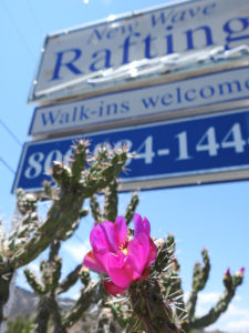 New Wave sign with cholla cactus